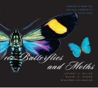 100-butterflies_and_moths